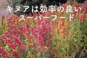 オーガニックレーベルの葉酸キヌア1.jpg
